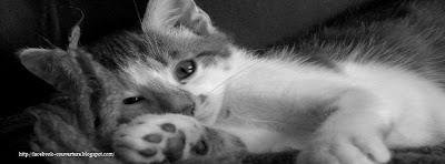 Couverture facebook chat en noir et blanc