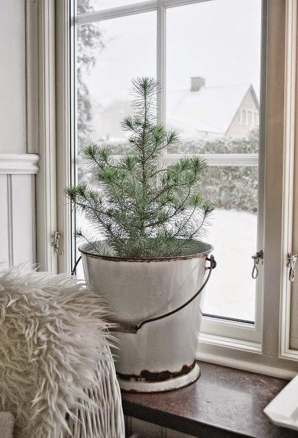 cubo zinc pino navidad