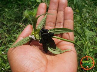 Memotret Kumbang Begitu Dekat