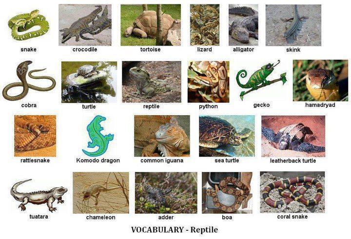 reptiles vocabulary