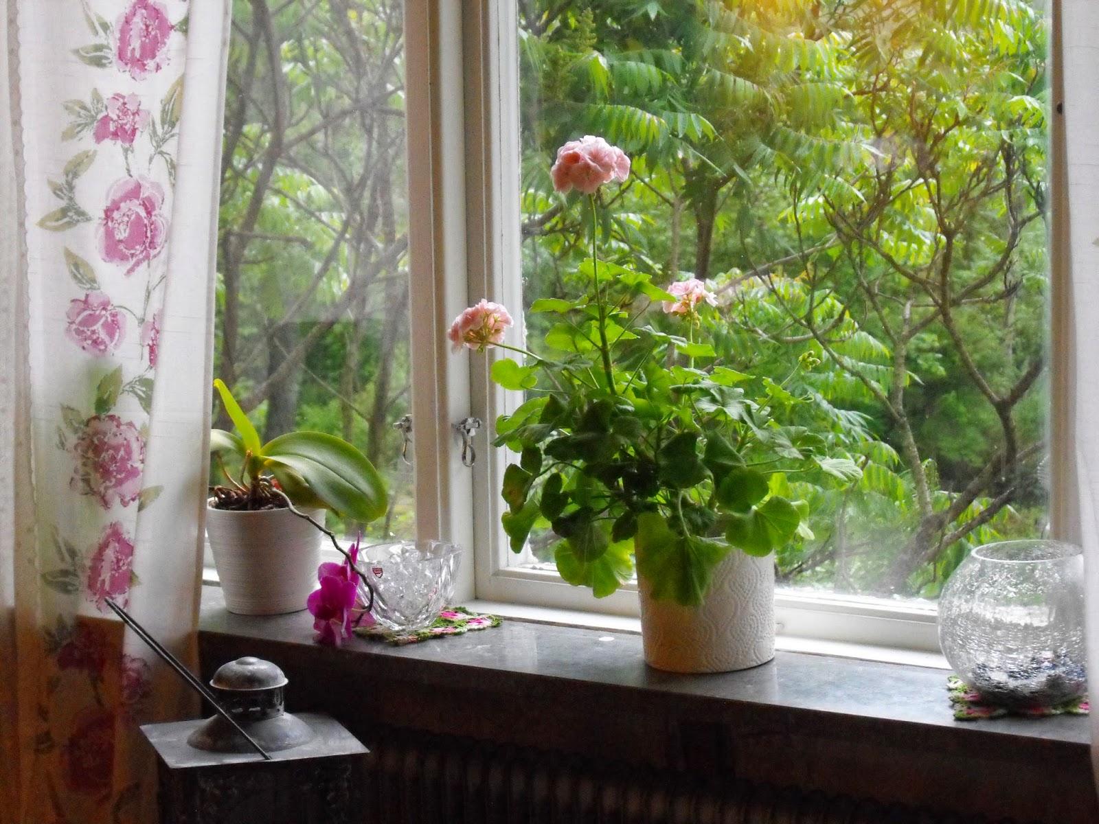 rosa fönster