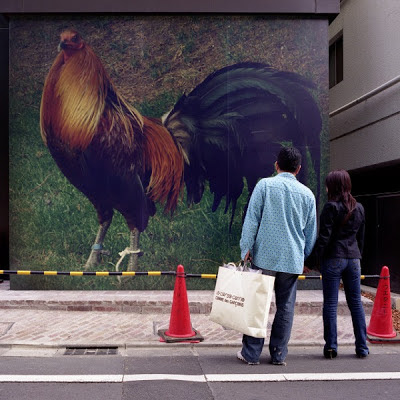 mural de gallo brown red