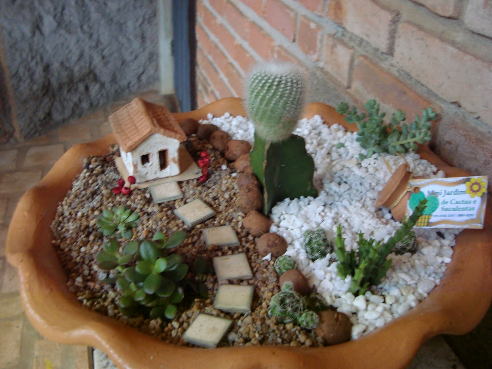 Suculenta~ Mini Jardim Cactos Suculentas