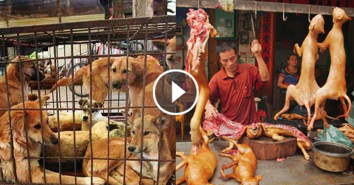 Dog Chinese Eating