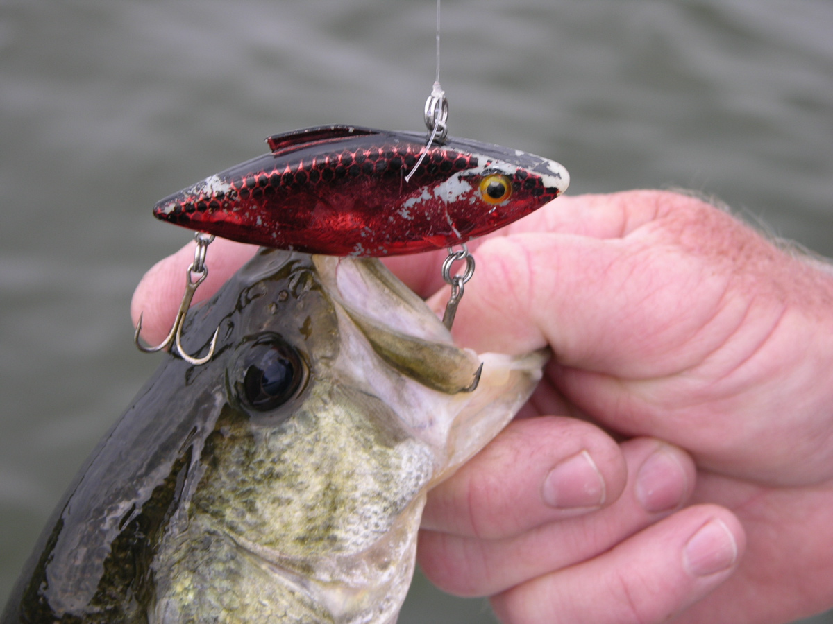 Outdoorscribe lip less crankbaits are top lure for for Spring bass fishing