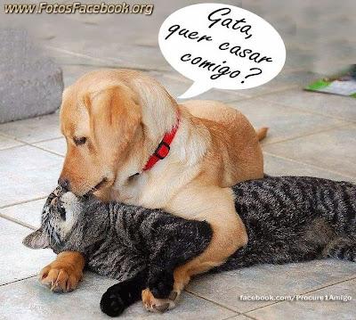 Imagens Engraçadas para Facebook com Frases