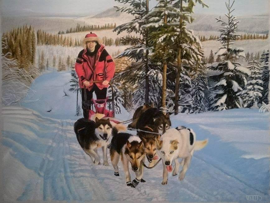 Photo chien traineau husky - 123rf image gratuite ...