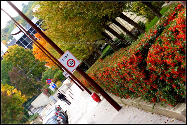 Baies berries Versailles autumn