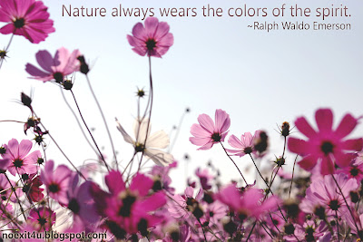 NATURE QUOTES WALLPAPER