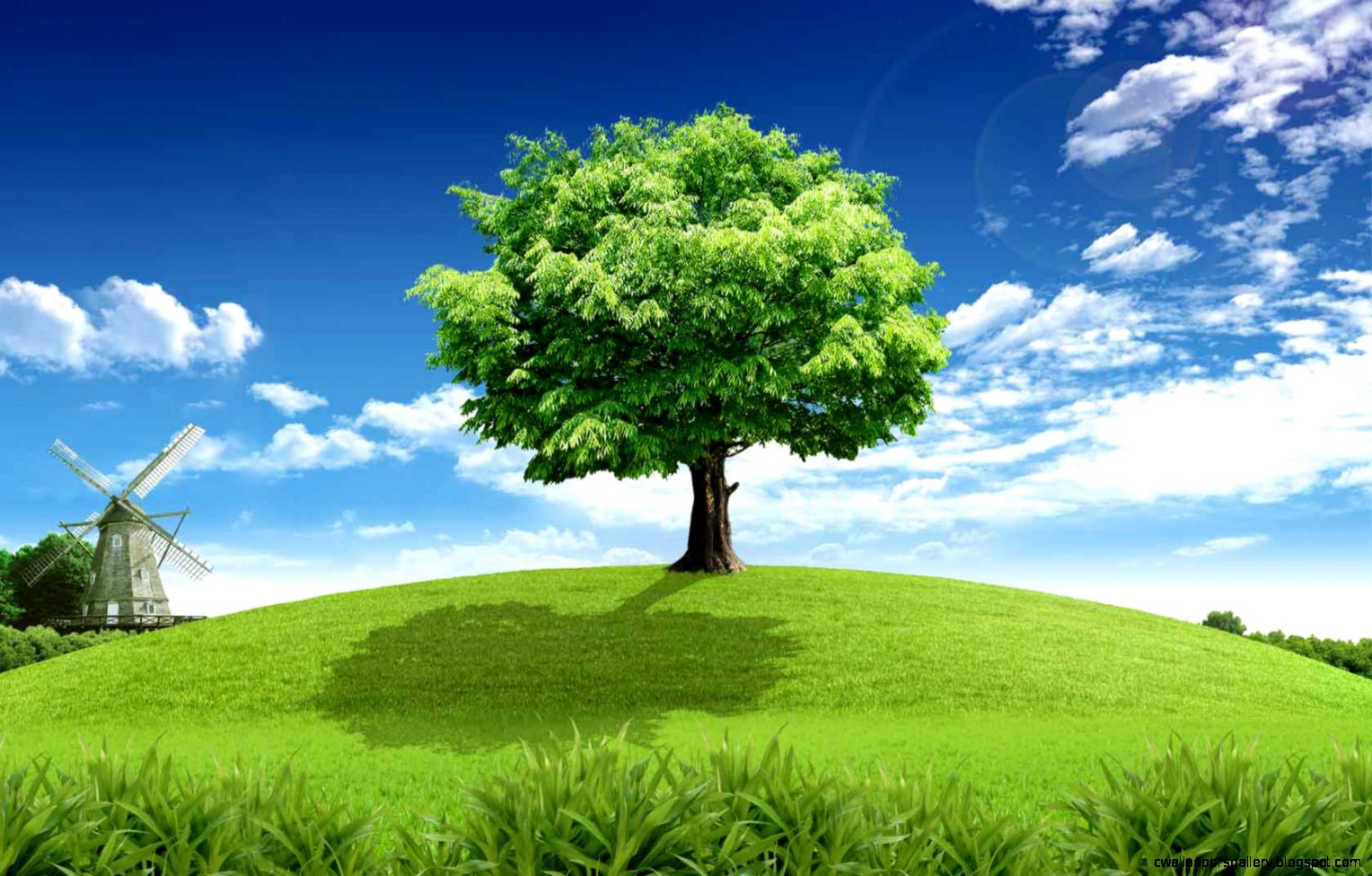 Collection of Green Tree Wallpaper on
