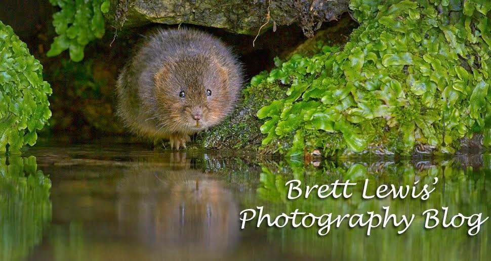 Brett Lewis Photography