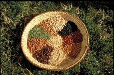 Banco de sementes para reflorestamento