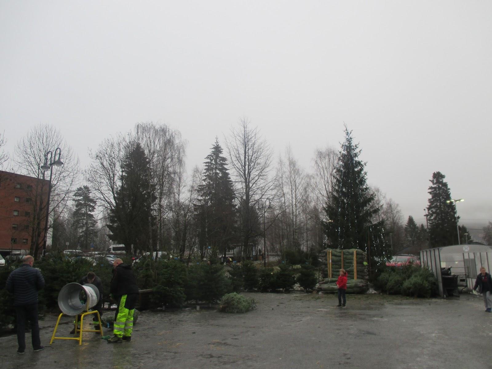 juletrær til salgs