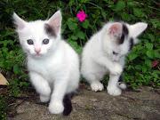 White Fat-Cat white fat cat