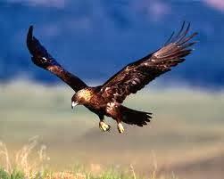 Predadores-Aves