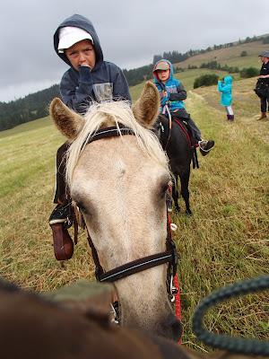 Orawa, Lipnica Wielka, konie, kucyki, jazda konna, spacer, granica polsko - slowacka