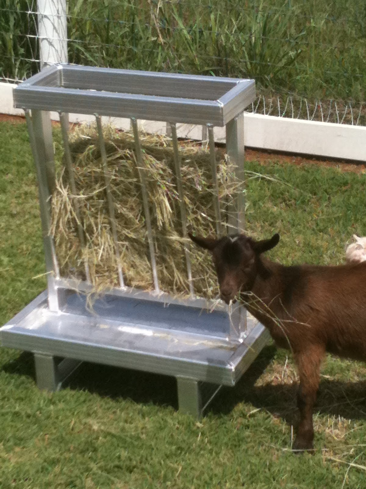 goats for hay goat pin horses rack with square feeder bale pinterest