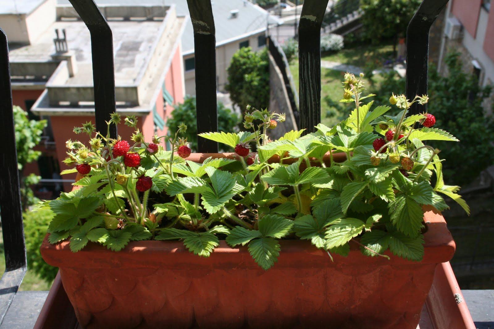 Piante da frutto in vaso black hairstyle and haircuts - Calendario trattamenti piante da frutto ...