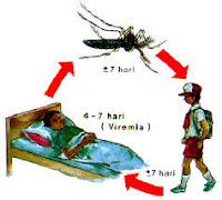obat herbal penyakit demam berdrah