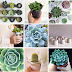 Where to Buy Cactus and Succulents in Manila?