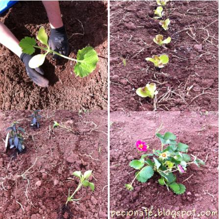 l'orto di maggio: da un prato di erbe spontanee al primo raccolto