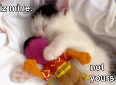 gambar-lucu-kucing-lucu-tidur-bareng-boneka.jpg