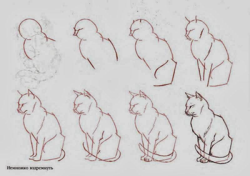 How to draw cats diy craft projects