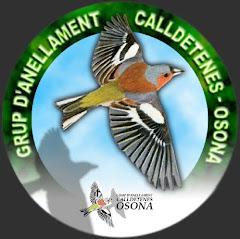 Grup d'Anellament Calldetenes-Osona