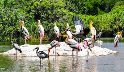 Nalabana Bird Sanctuary in Chilka Lake Odisha India