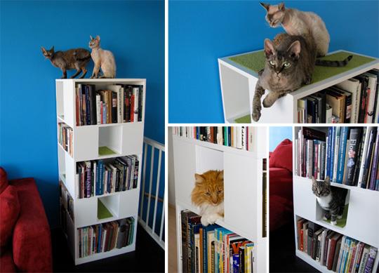 kissat kirjahyllyssä