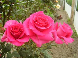 imagenes de flores hermosas