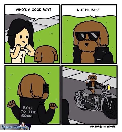 funny comics good dog