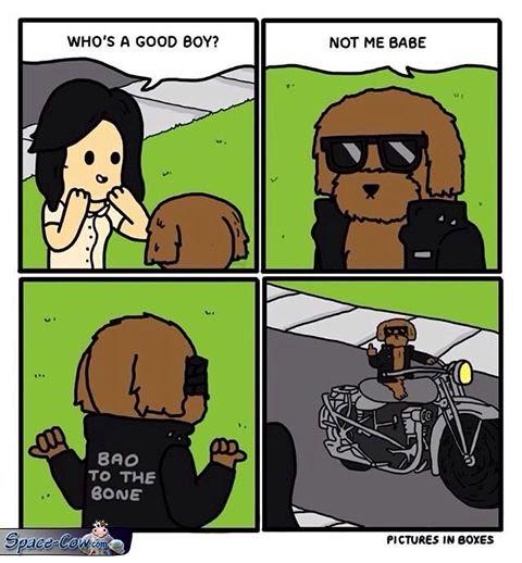 funny comics good dog
