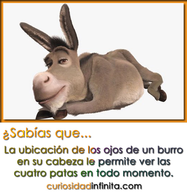 Imagenes del burro de shrek con frases - Imagui