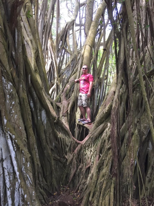 Climbing Banyan Tree North Shore Oahu