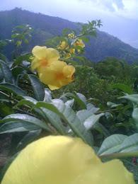 Salamina Caldas y sus paisajes