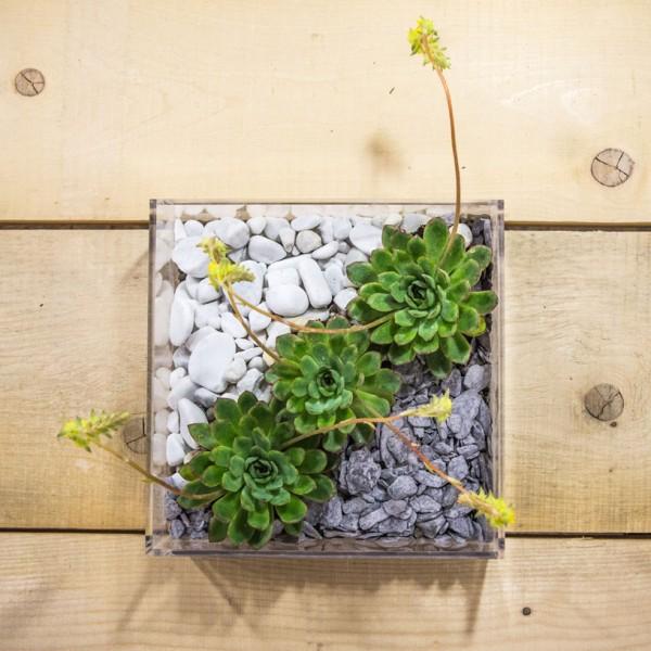 vaso composizione piante grasse