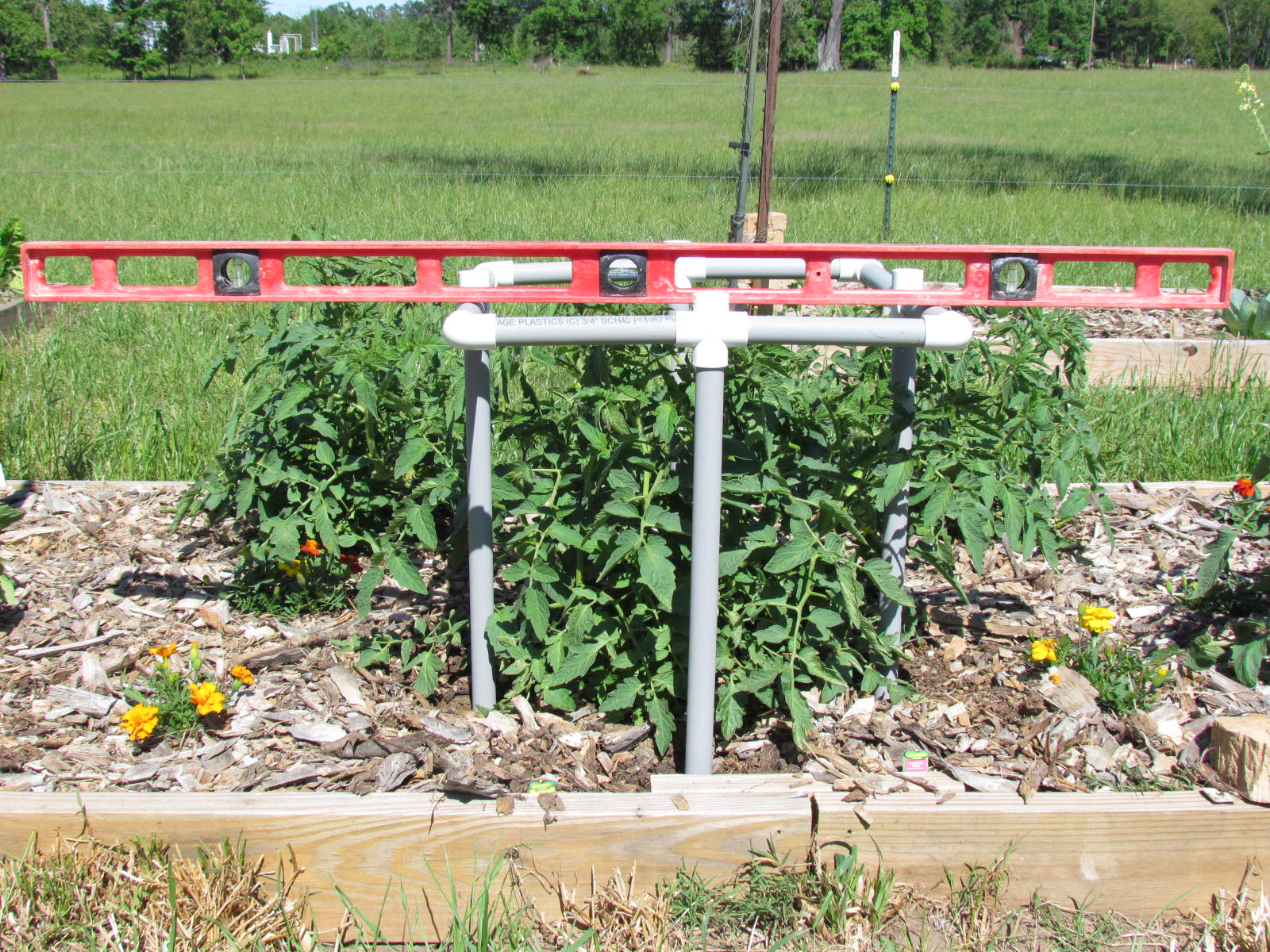 Pin pvc pipe tomato cages on pinterest