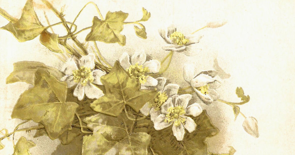 Vintage Flower Book Cover : Antique images free vintage flower graphic