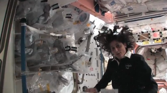 sunny williams space station - photo #9