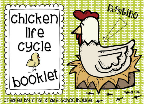Classroom Freebies Too Chicken Life Cycle – Chicken Life Cycle Worksheet