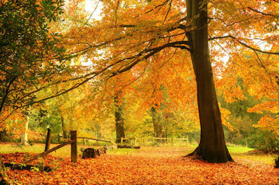 Hermoso paisaje en otoño - Beautiful autumn fall forest landscape