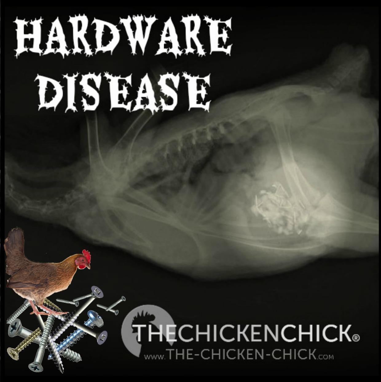 the chicken hardware disease in backyard chickens