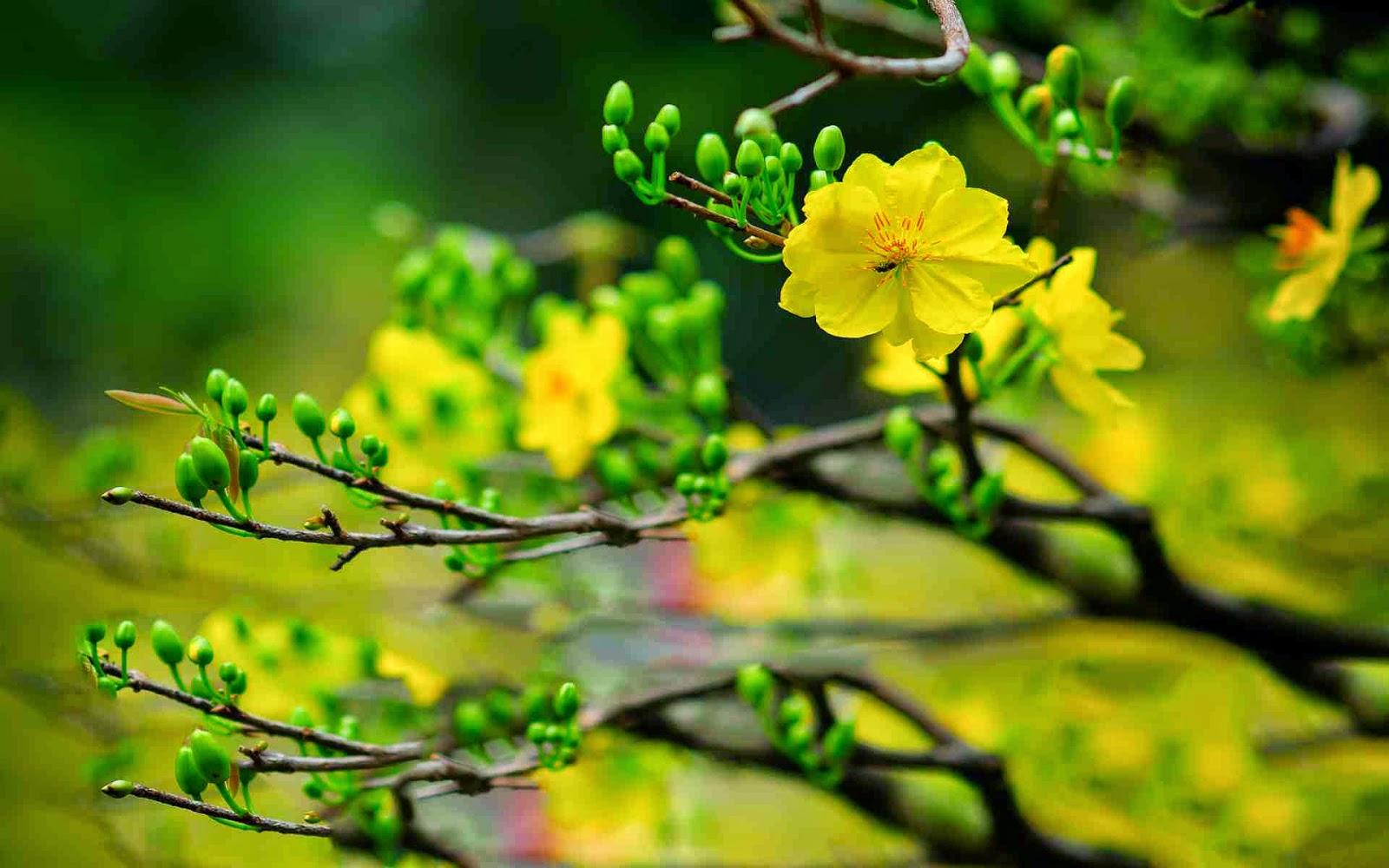 ảnh nền hoa đẹp