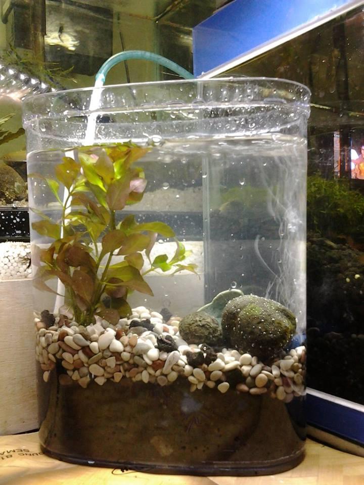 Aquascape Mini Sederhana
