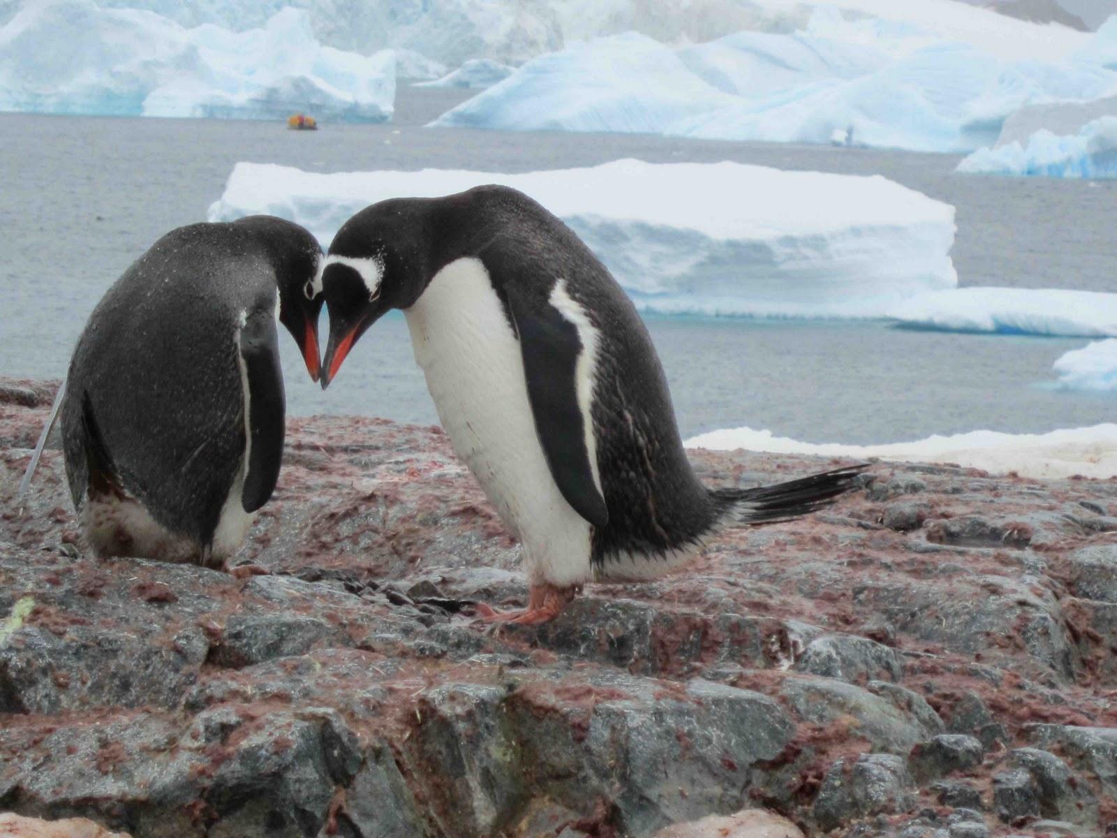 penguin dating Dating is murder a novel a novel a novel by harley jane kozak by harley jane kozak by harley jane kozak by harley jane kozak by harley jane kozak.