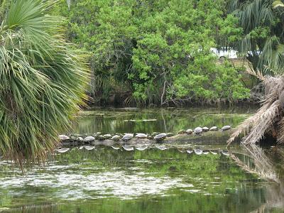 turtles in lagoon:  City Park, NOLA