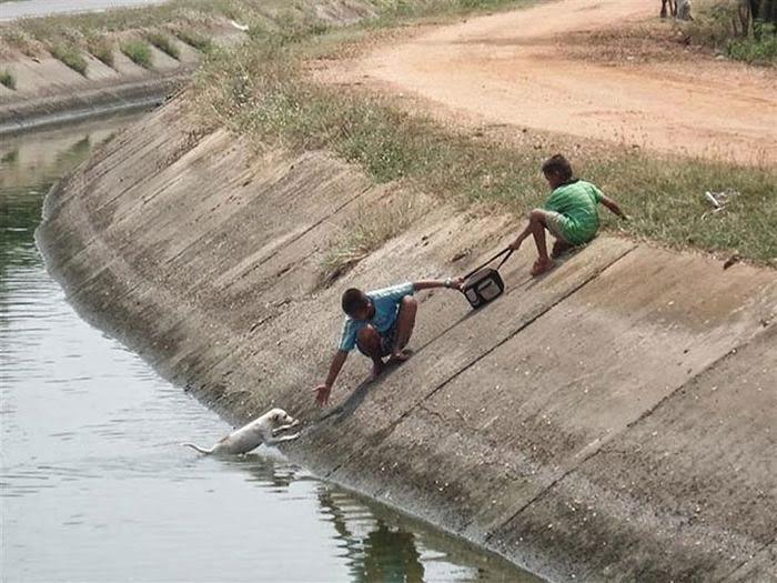 People doing amazing things for animals (28 pics), two kids help puppy falling into a river