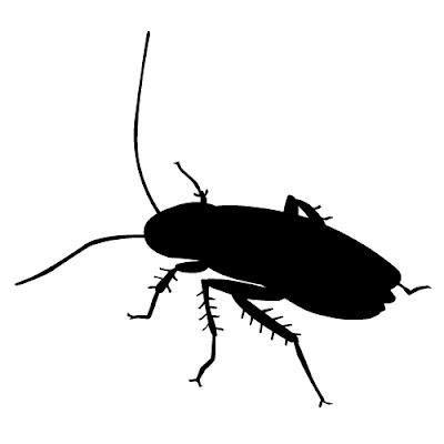 Algo sobre las cucarachas