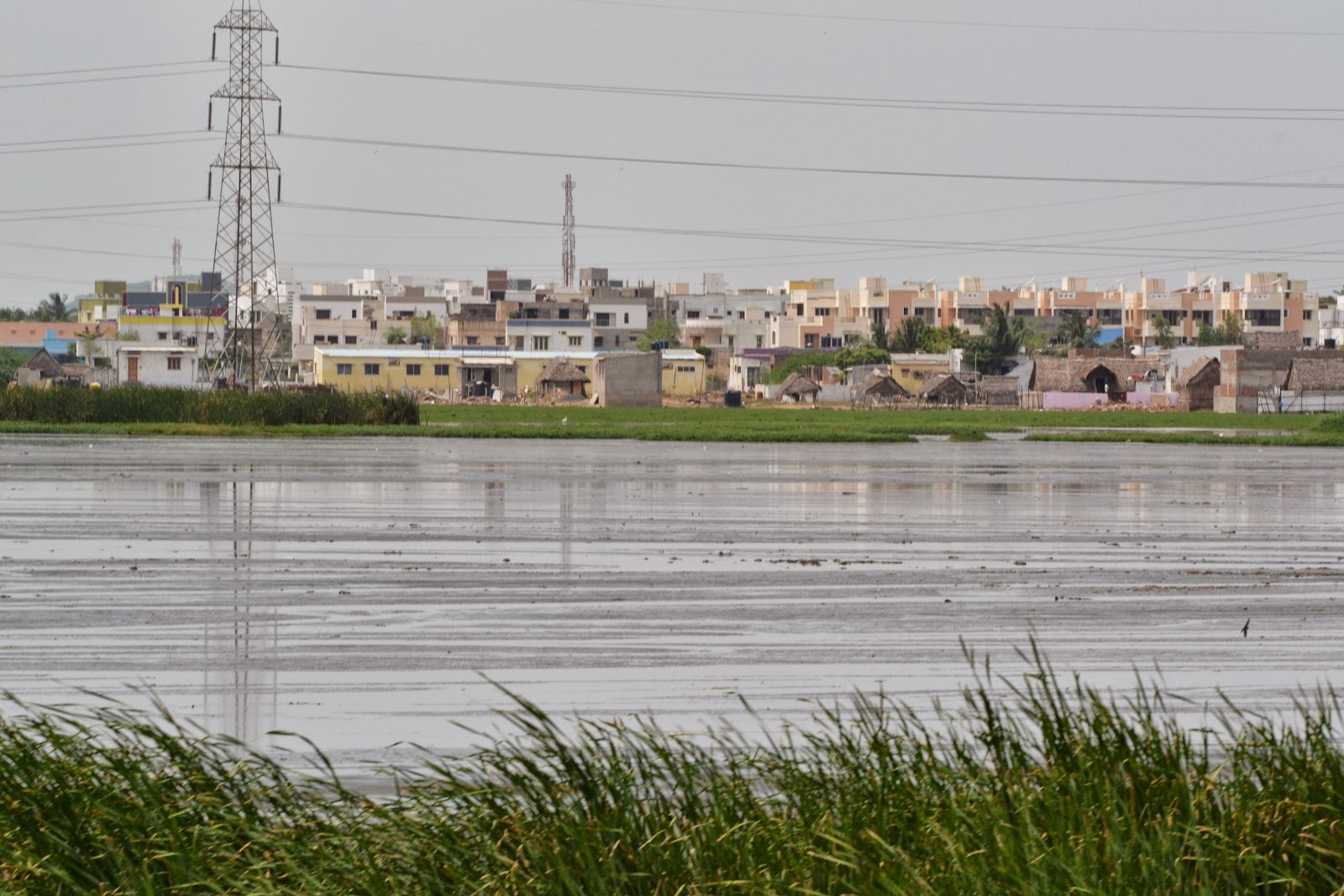City in the background of Pallikaranai wetland